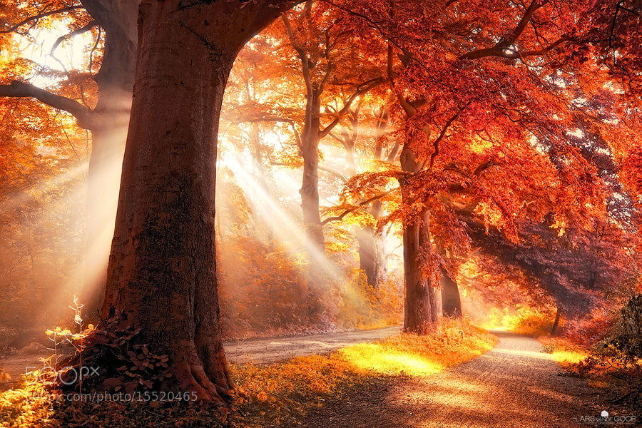 Photograph Fall on Fire  by Lars van de Goor on 500px
