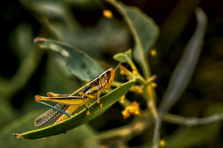 Photograph Grasshopper by Sanya Ad on 500px