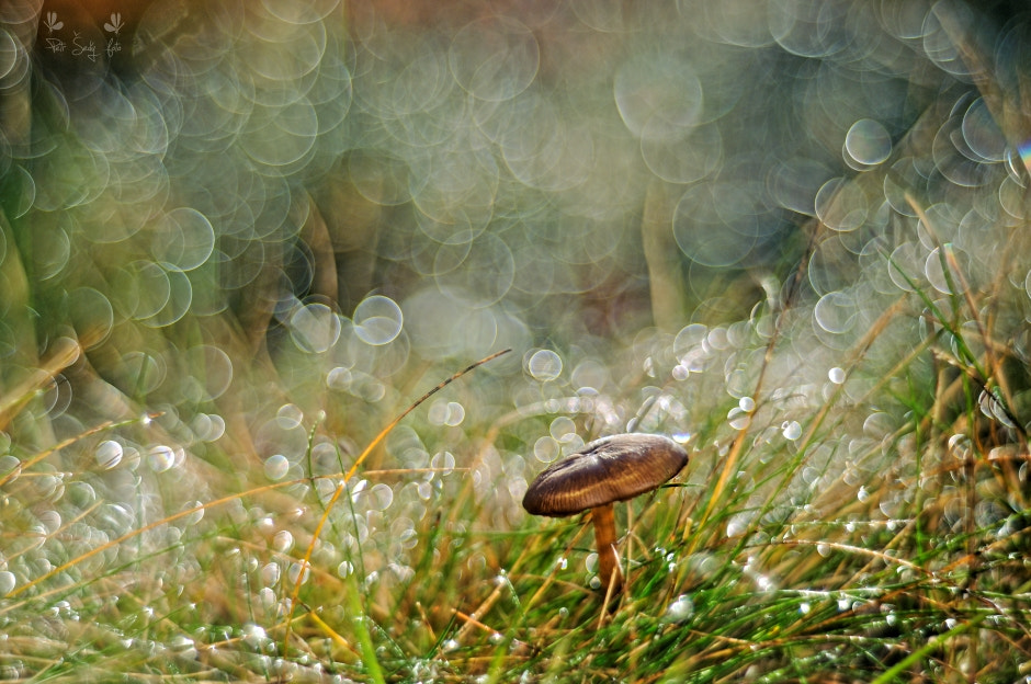 Photograph With mushrooms. by Petr Šedý on 500px