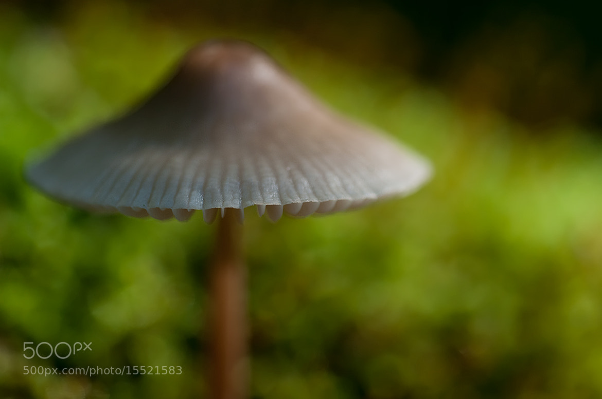 Photograph Hat in Light by Rob Janné on 500px