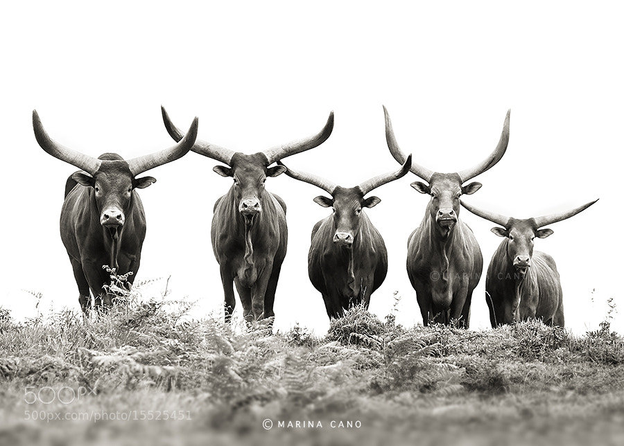 Photograph The Five by Marina Cano on 500px