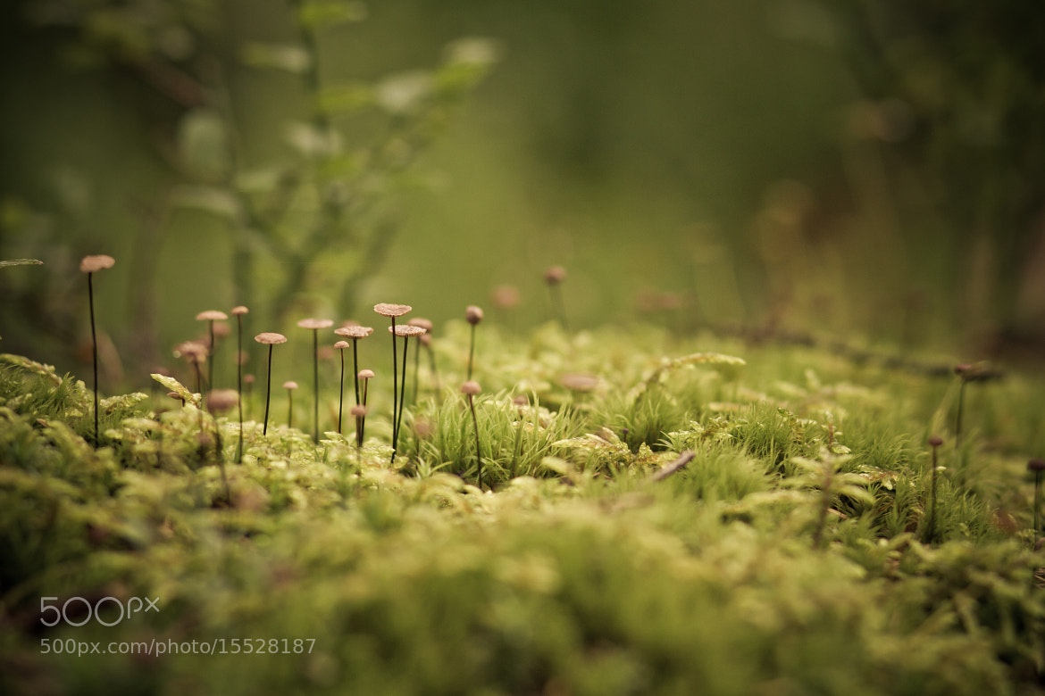 Photograph Magic Mushrooms by Aph Rodite on 500px