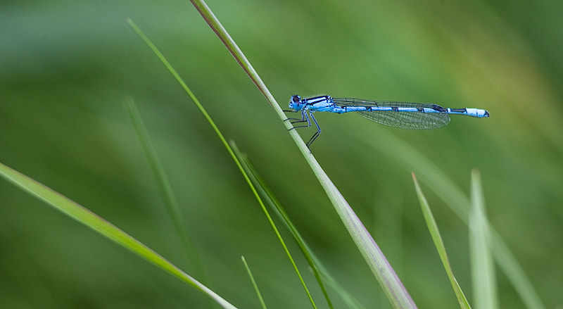Photograph Damselfly holding on by Mark Leeman on 500px