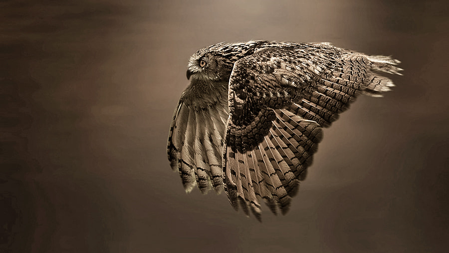 Eagle Owl sepia version by Ronald Coulter