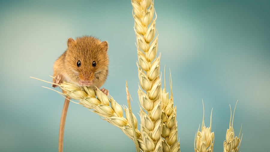nibbles... by Mark Bridger on 500px.com
