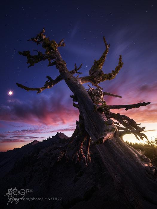 Photograph Dark Arbor by Alex Noriega on 500px