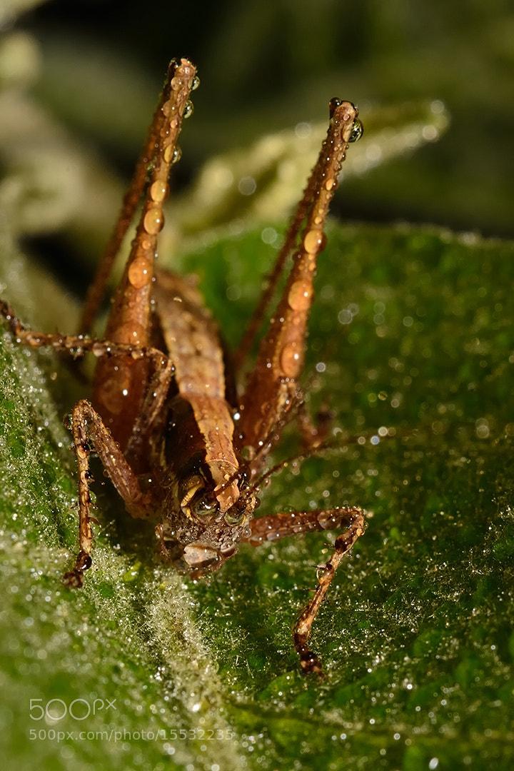 Photograph Grasshopper  by Dan-Alexandru Buta on 500px