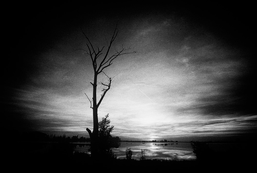 Photograph Lonely tree by alexandra fira on 500px