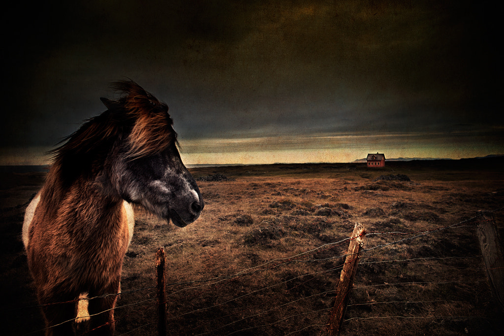 "Photograph Horse in ""Sharp-lava"" by Snorri Gunnarsson on 500px"