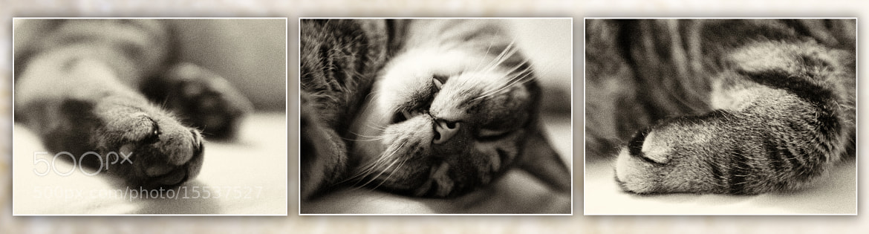 Photograph Sleeping Beauty by Steffen Hailer on 500px