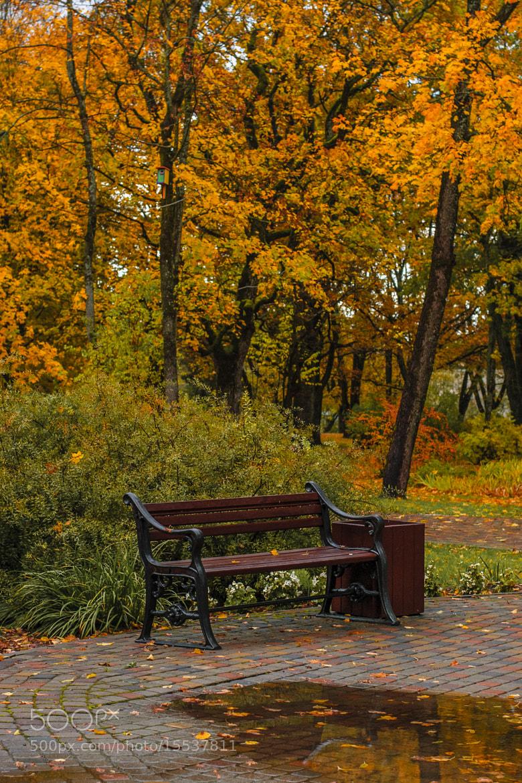 Photograph Autumn by Alexander Uljanov on 500px