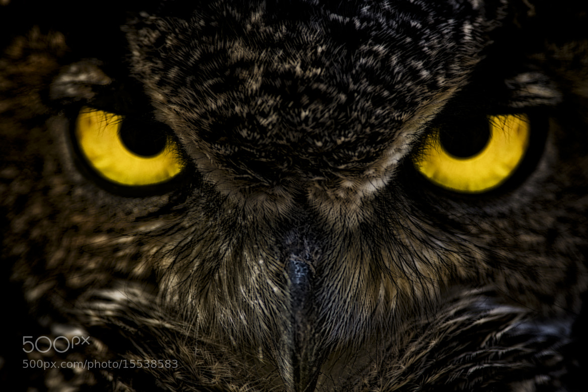 Photograph I'm watching you by Alessandro Cancian on 500px