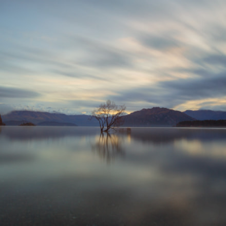 Wanaka Tree, Canon EOS 5D MARK III, EF16-35mm f/2.8L USM