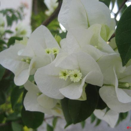 Flor en Santa Cecilia, Edo. de Méx.