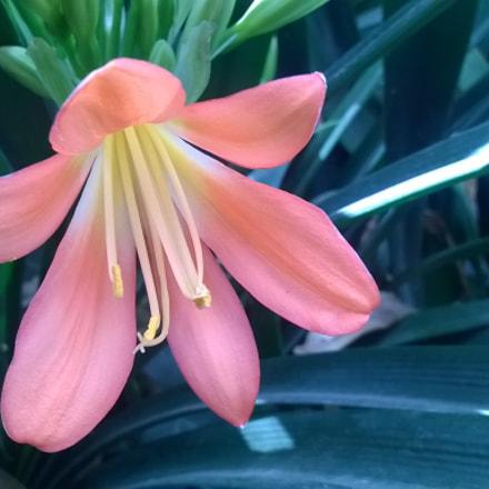 Flor natural en Jardín Sta, Cecilia, Edo, México