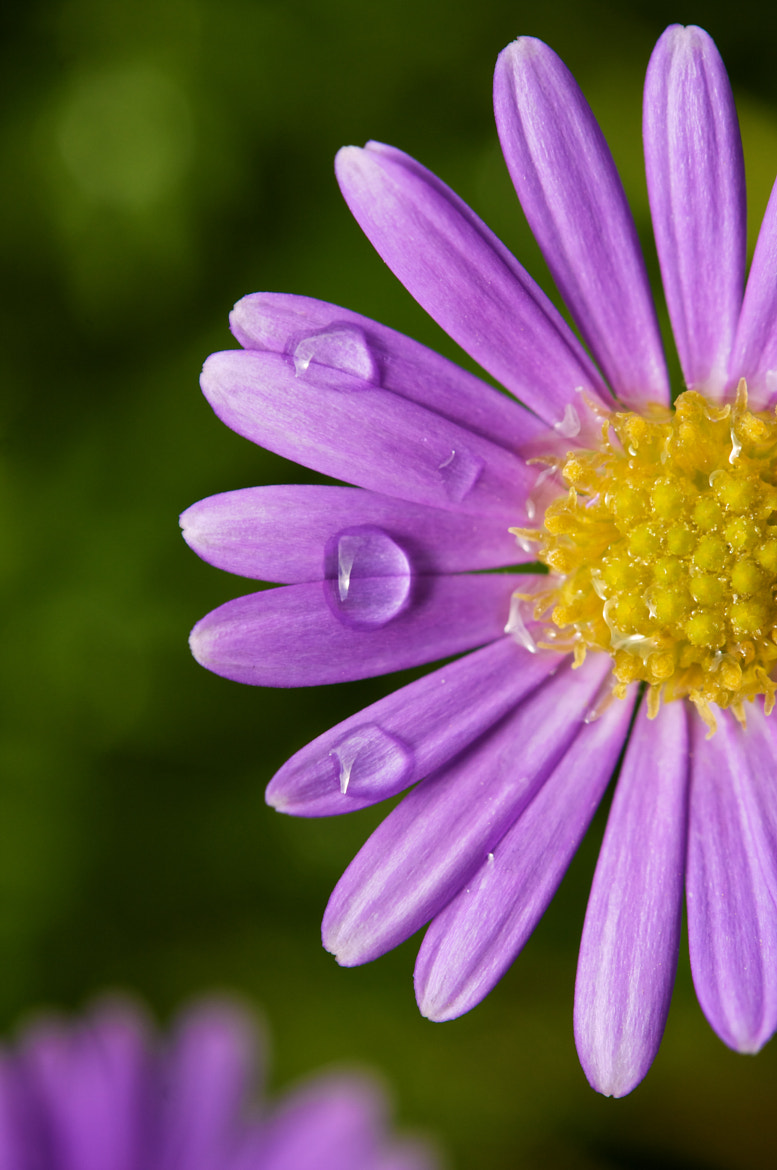 Photograph Flower after the rain by Remi Longva on 500px