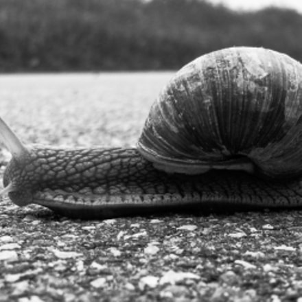 A snail on the, Fujifilm FinePix AV200