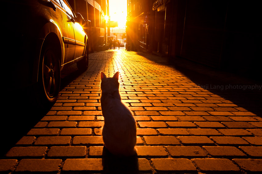 Sunset Cat by Marji Lang on 500px.com