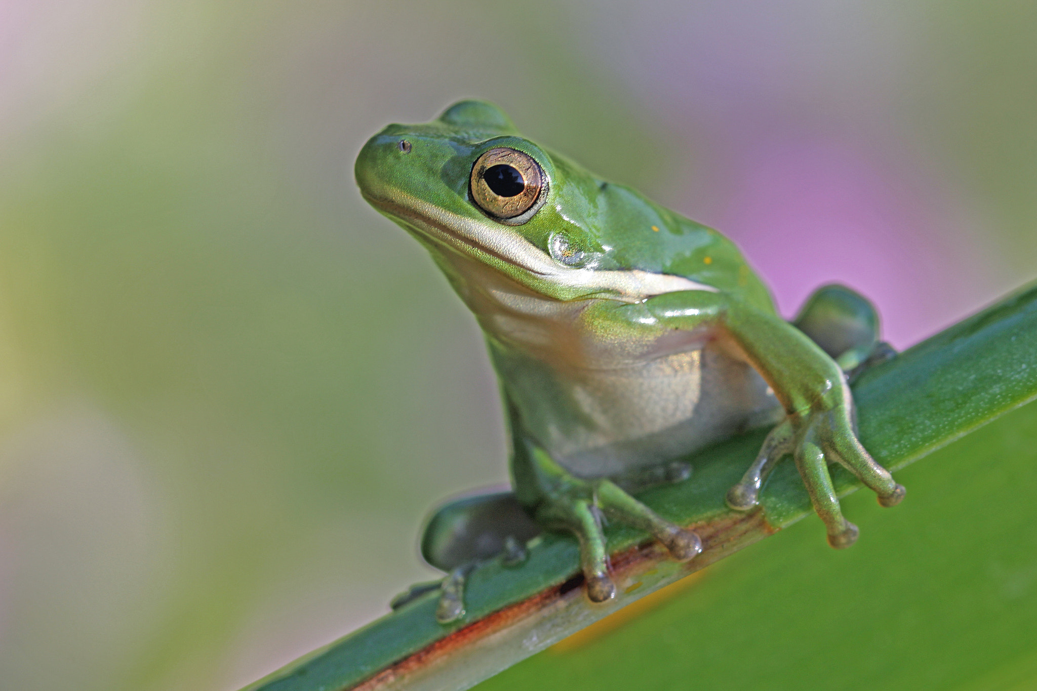 Photograph Froggy Morning by Jane Sleeth on 500px