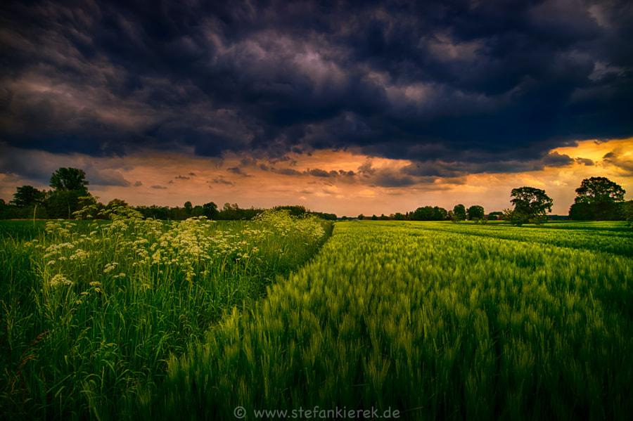 Stormy field II