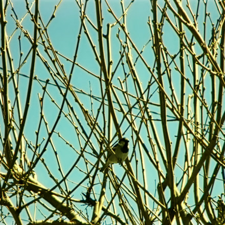 A bird among the, Canon POWERSHOT ELPH 115 IS
