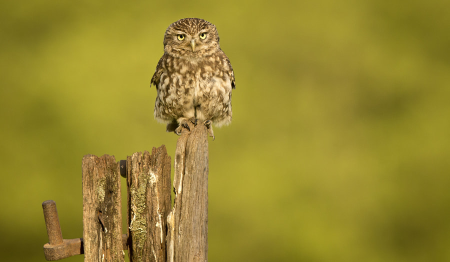on the naughty step... by Mark Bridger