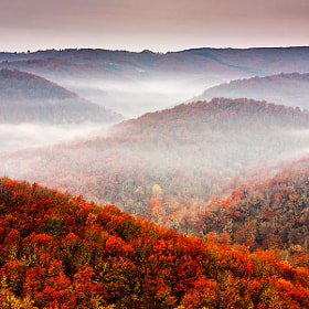 Autumn Fogs by Evgeni Dinev (evgord)) on 500px.com