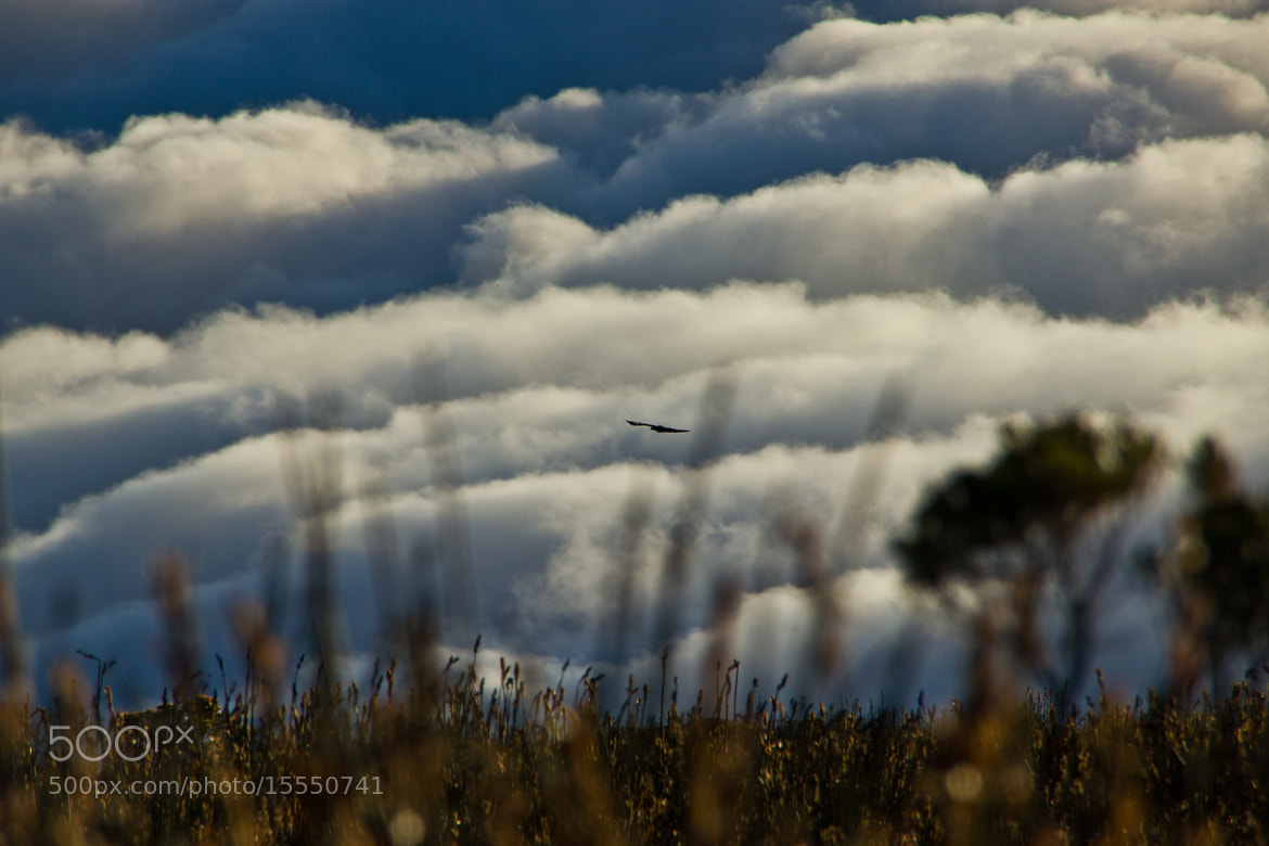 Photograph Clouds & Bird by Tobias Leopold on 500px