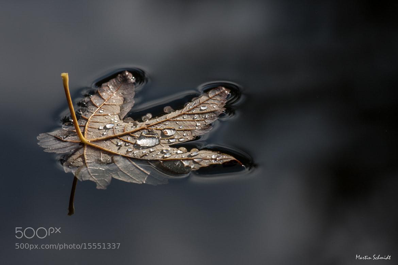 Photograph Autumnenvoy by Martin Schmidt on 500px