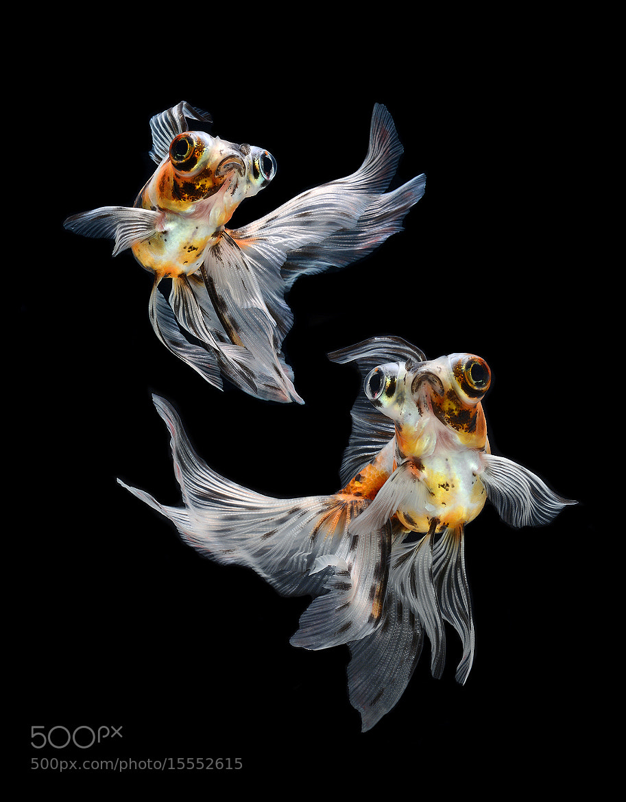 Photograph fish dance by visarute angkatavanich on 500px