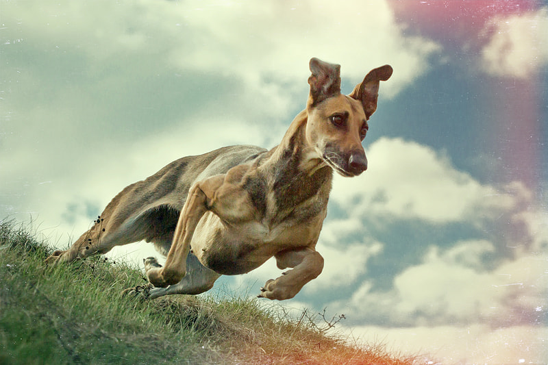 Photograph 70s action by Elke Vogelsang on 500px