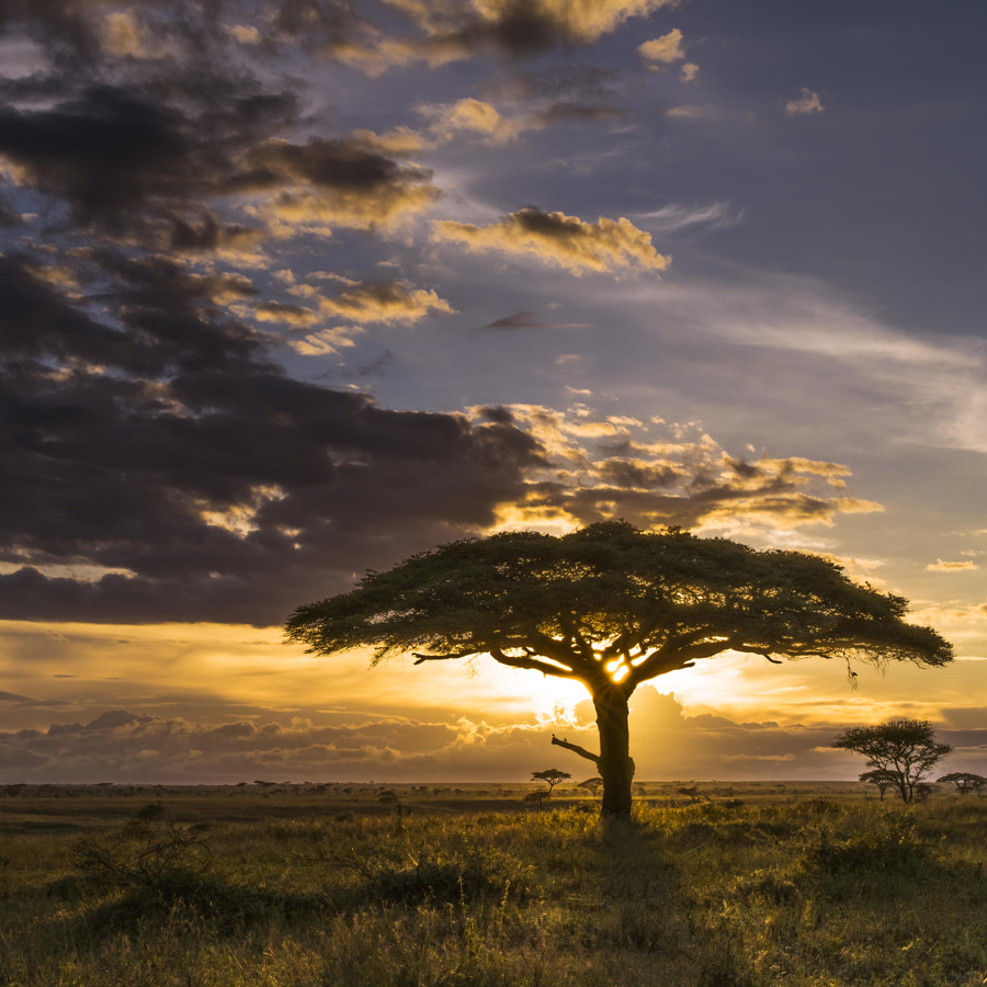 As the Sun de Chris Fischer sur 500px.com