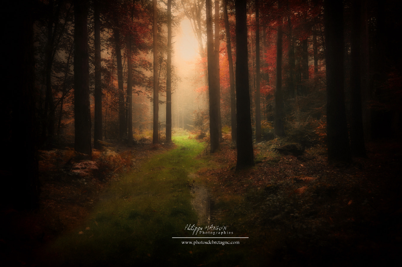 Photograph BROCELIANDE - FOREST CALL by Philippe MANGUIN on 500px