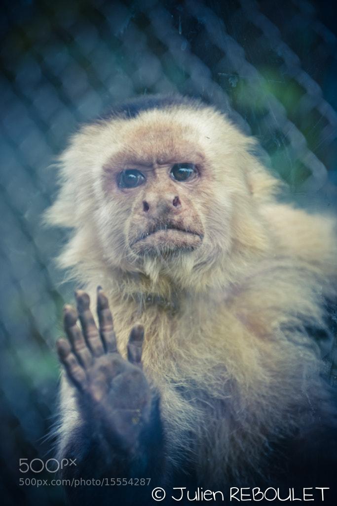 Photograph Little Monkey by Julien REBOULET on 500px
