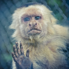 Little Monkey by Julien REBOULET (antares692002)) on 500px.com