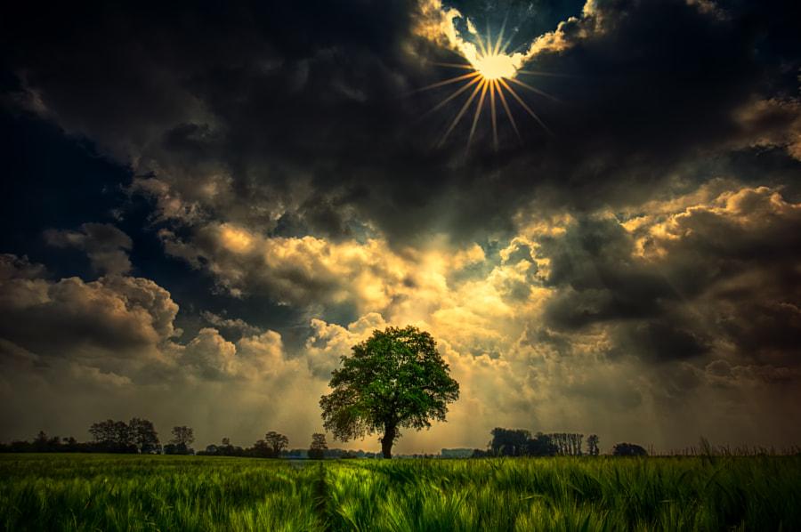 Tree under sun