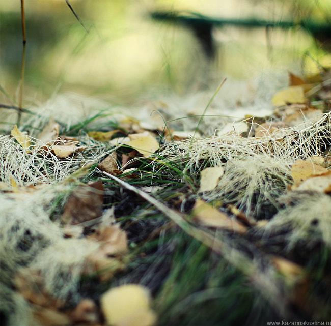autumn. inside