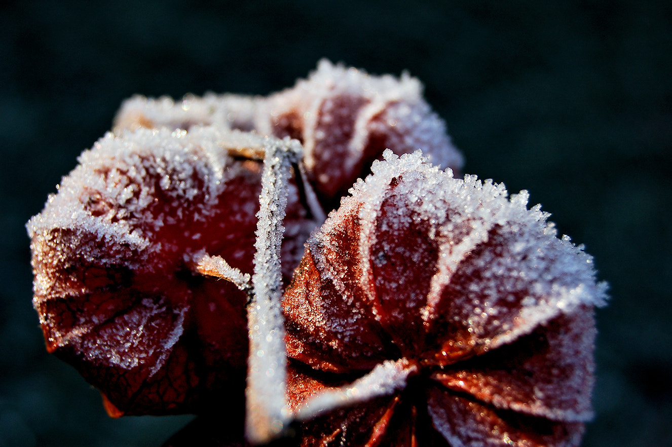 Photograph Frost by Frank de Ridder on 500px