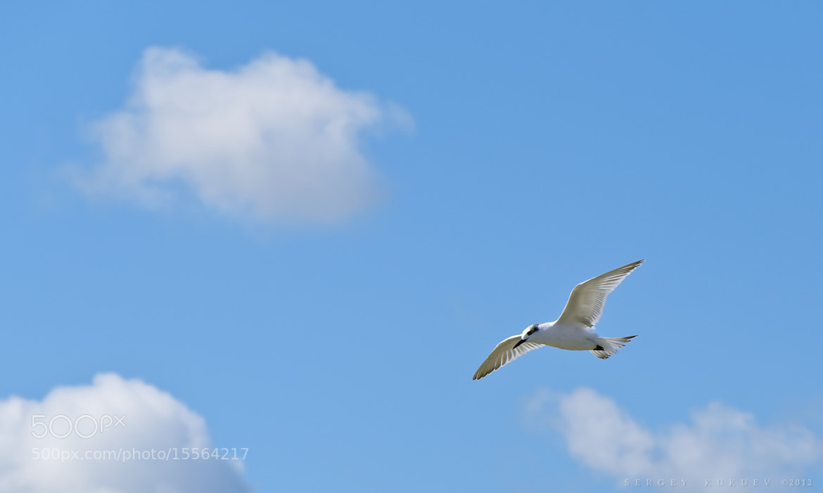 Photograph Little seagull by Sergey Kukuev on 500px