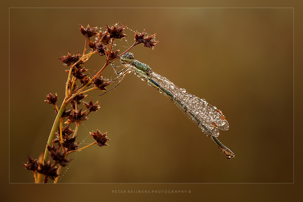 Photograph Diamonds & Pearls by Peter Reijners on 500px