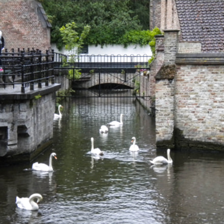 Minnewater Lake (Bruges), Nikon COOLPIX S225