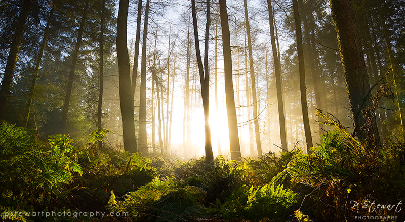 Photograph Full Beam by Philip Stewart on 500px