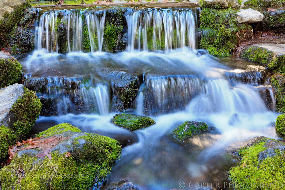 Photograph Fern Springs by Justin Carter on 500px