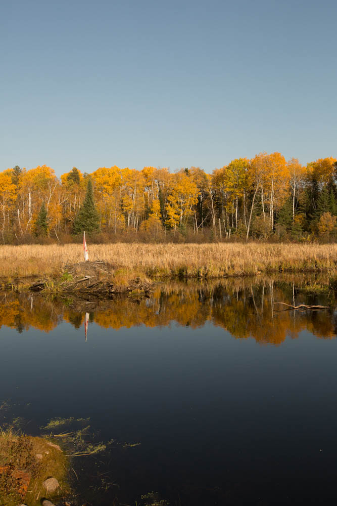 Photograph Home of the Canadian Beaver by Carl Thomasson on 500px