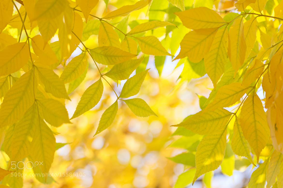 Photograph When the Last Days of Summer Turn to Gold by Renae Smith on 500px
