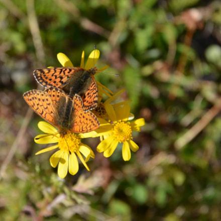 Two butterflies sitting on a flower