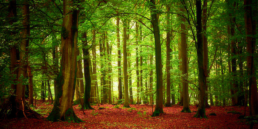 Photograph Forest by Magnus Larsson on 500px