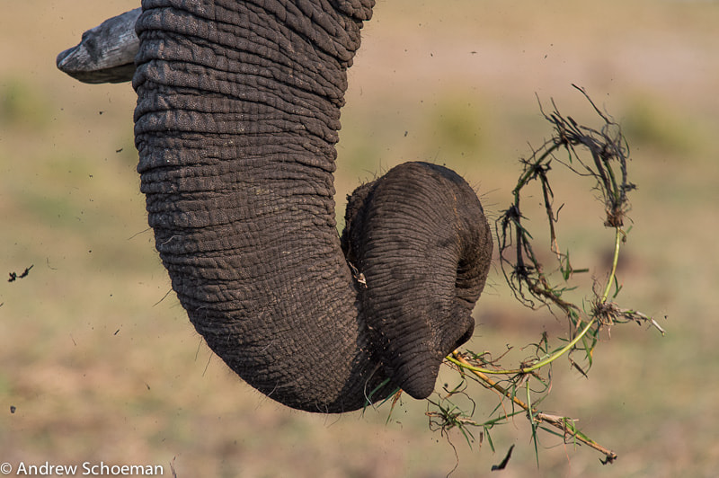 Photograph Twirly trunk! by Andrew Schoeman on 500px