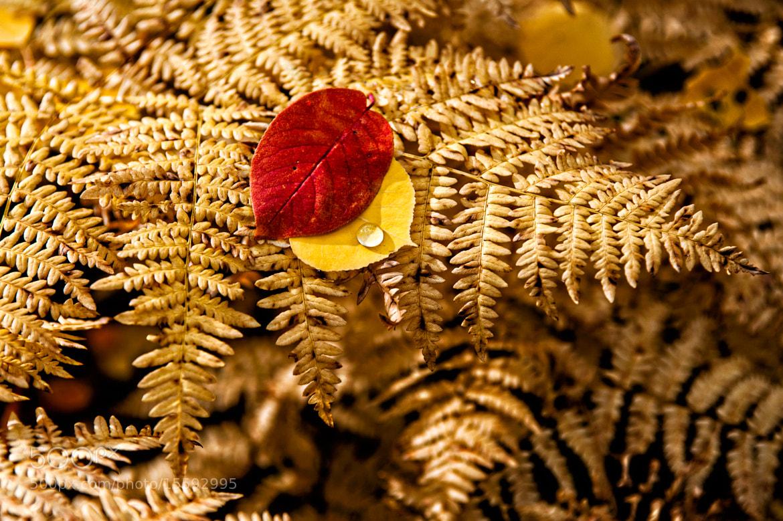 Photograph Autumn Fern by Dan Smith on 500px