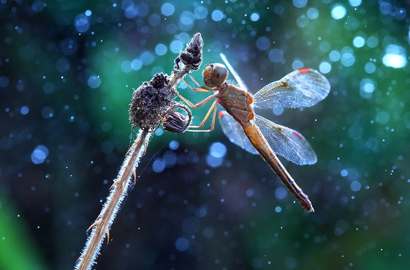 Photograph Dragonfly in the winter by Artlaboratory S on 500px